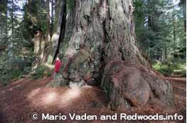 レッドウッド国立州立公園
