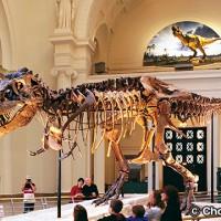 フィールド自然史博物館 Field Museum of Natural History