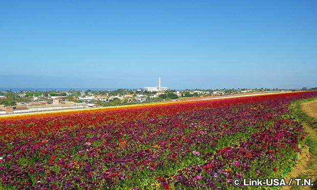 フラワーフィールド Flower Fields