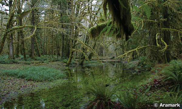 クィノルト レインフォレスト Quinault Rain Forest