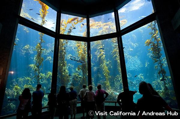 モントレー・ベイ水族館