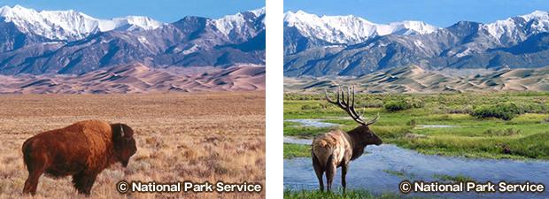 グレートサンドデューンズ国立公園の