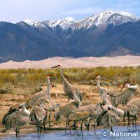 グレートサンドデューンズ国立公園の野鳥